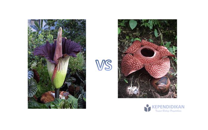 Perbedaan bunga bangkai dan bunga rafflesia