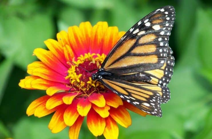 bunga dengan kupu-kupu