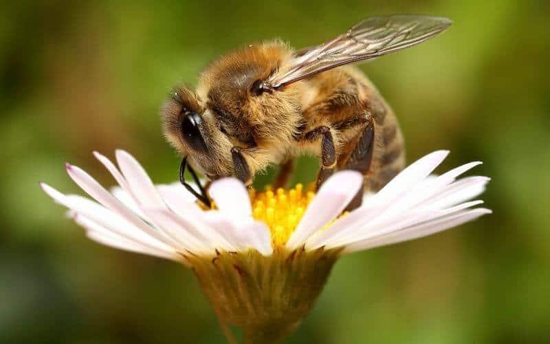 bunga dengan lebah