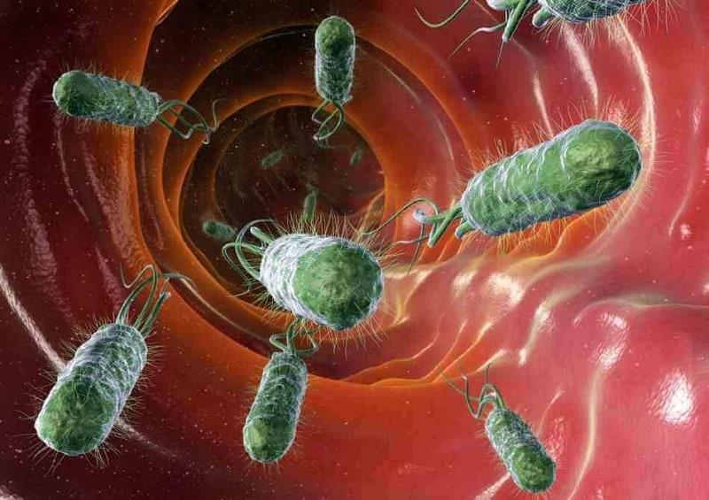 manusia dan bakteri