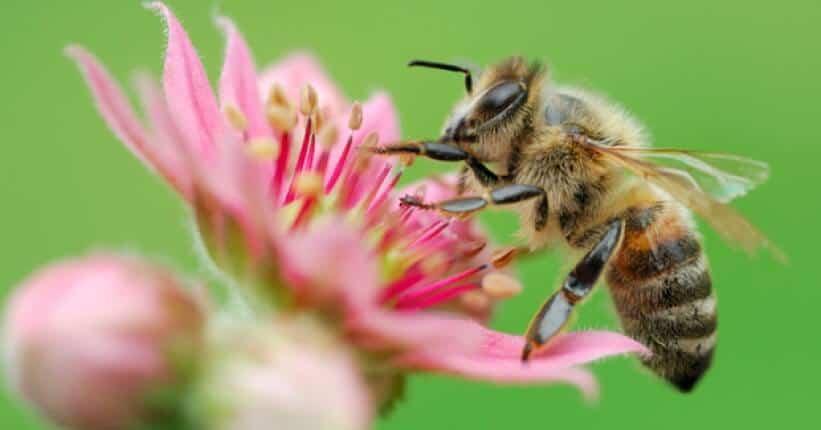 perantara penyerbukan oleh serangga