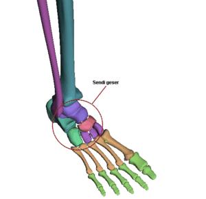 Sendi geser pada tulang pergelangan kaki