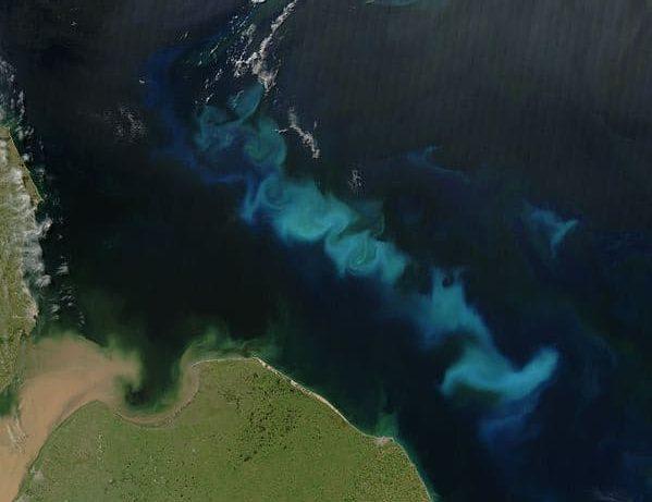 kumpulan besar fitoplankton